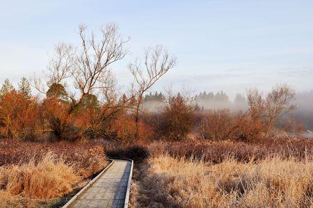boardwalk trail: Boardwalk trail in deer lake park  Stock Photo