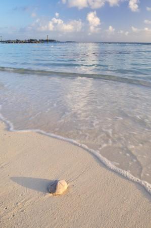 sand dollar: sand dollar on caribbean white sand beach