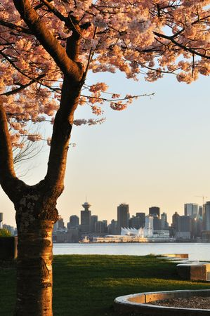 Cherry blossom and downtown Vancouver
