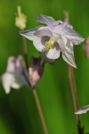 pal: pal purple clombine flower Stock Photo
