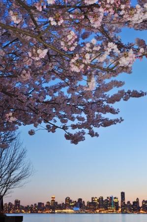 桜とバンクーバーのダウンタウン