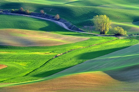 The rolling hills farmland in Palouse Washington Imagens