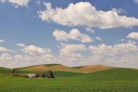 colfax: Countryside scene in spring near Colfax in Washington State