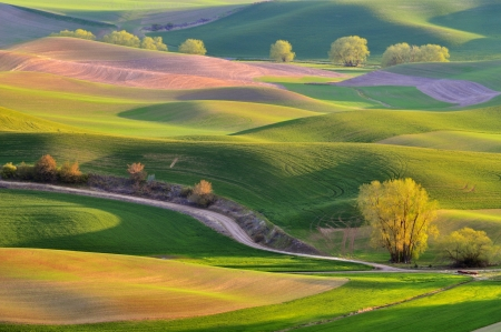 rolling landscape: The rolling hills farmland in Palouse Washington Stock Photo