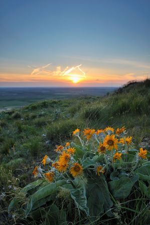 wildflowers and sunset on Steptoe in Whitman County