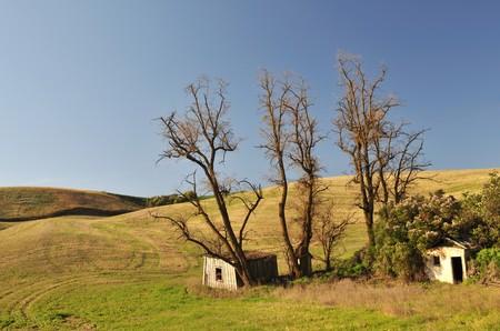 colfax: Abandoned shack in farmland near Colfax, Washington