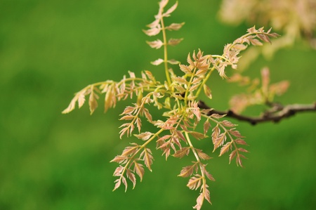new leaves on a tree branch in spring Reklamní fotografie