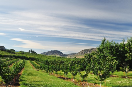 Vineyards and Orchards in Osoyoos, Okanagan Valley Stockfoto