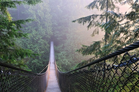 Lynn Canyon Park & Suspension Bridge in Lynn Valley