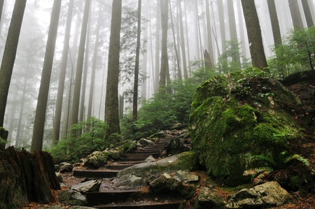 ライチョウを挽くハイキング コースの霧の森