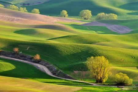 rolling landscapes: The rolling hills farmland in Palouse Washington Stock Photo