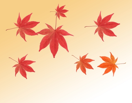 Maple leaves in autumn color on gradient background photo