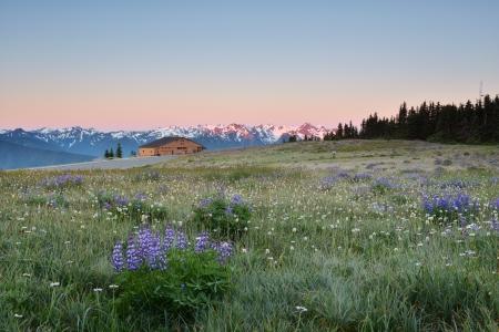 Hurricane Ridge sunrise - Olympic National Park, Washington