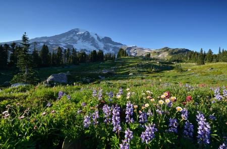 マウント ・ レーニエ国立公園の楽園で満開の野の花 写真素材