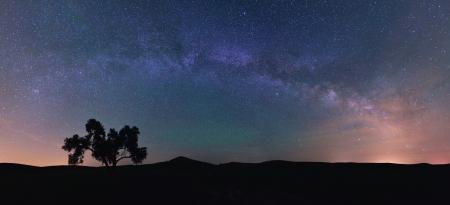 palouse: Milky Way and Cotton Tree on the Palouse Farmland Stock Photo