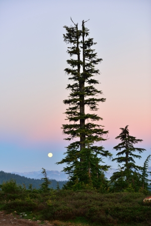 elfin: Moonset at Elfin Lake trail near the town of Squamish