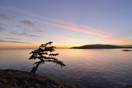 juniper tree: Juniper Point Sunset, Lighthouse Park in West Vancouver