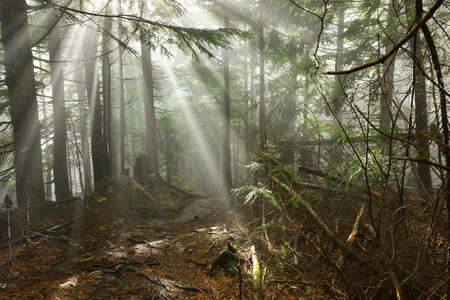 Lynn Peak hiking trail with Sun Ray