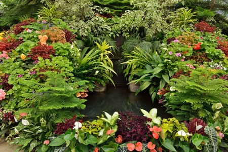begonia: Potting Flower Display with water fountain in the center