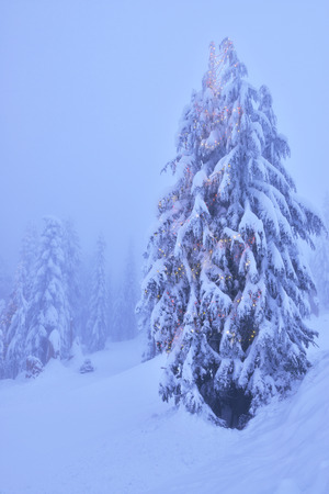 grouse: Christmas tree with lights in snowy forest on Grouse Mountain