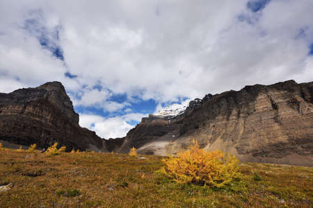 Larch Valley Trail in golden autumn color, Banff. Alberta