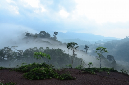 Mist of the  Krung Ching,330 m above sea level  photo