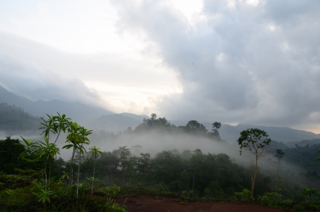 Mist of the  Krung Ching,330 m above sea level