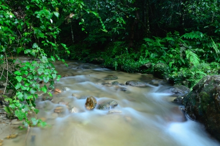 river in forest photo
