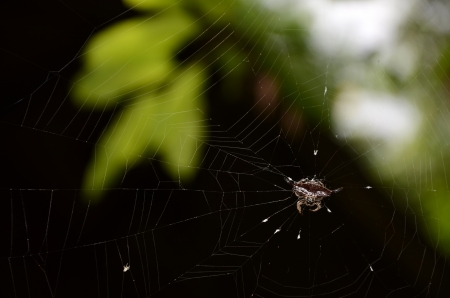 spider and web water drops in nature  photo