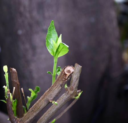 new growing leaf