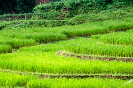 Terraced rice field landscape of Mae Hong Son, Northern Thailand Stock Photo