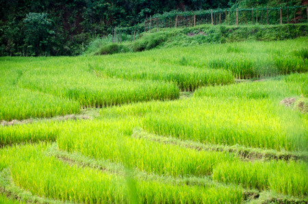 lTerraced rice field landscape of Mae Hong Son, Northern Thailand Stock Photo