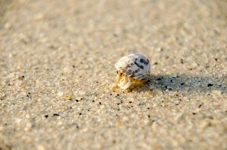 Hermit crab (lat. Paguroidea) Hermit crab (lat. Paguroidea) runs on sand with sunrise, lipe. Thailand Stock Photo