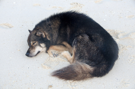Dogs are sleeping and relaxing on the sand under the tree at the beach.( Lipe Satun, Thailand) Stock Photo