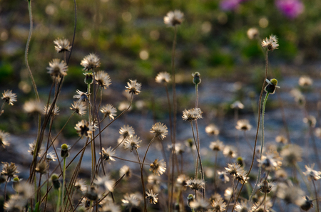 Field of daisy flowers with nature blur background