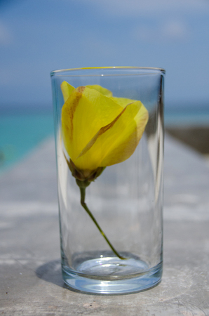 Yellow flowers in the glass on the beach.