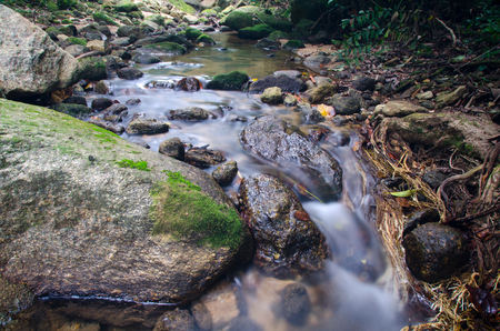 Stream of water flowing through giant beautiful tree roots. Thailand Stock Photo