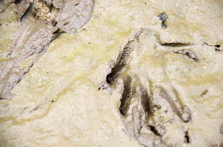Voranus. Close-up on a footprints in the sand near the river. Stock Photo