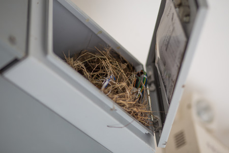 electricity meter: Old bird nest made from grass , it is in the old electricity meter box on room Stock Photo