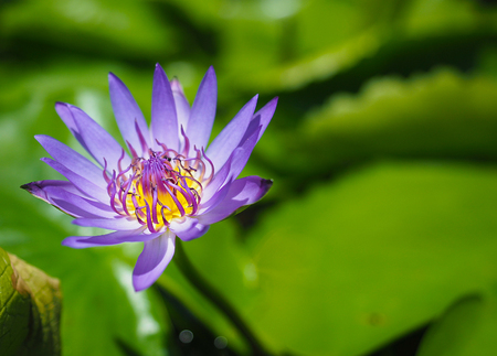 slower: The Lotus
