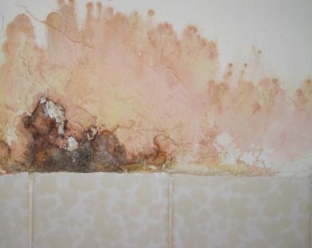 black mold: Mold in bathroom Stock Photo