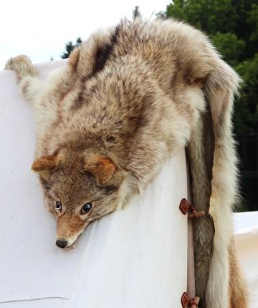 terribly: wolf fur