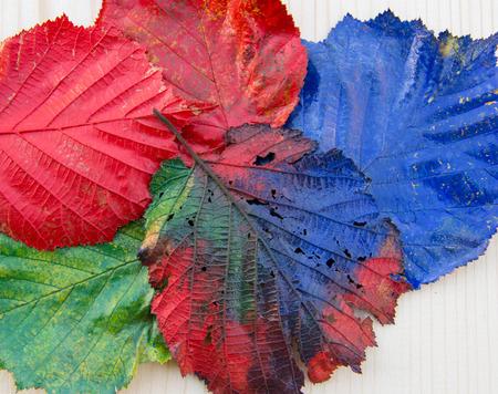 hojas de colores: Hojas coloridas