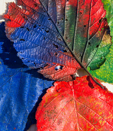 hojas de colores: Hojas de colores Foto de archivo