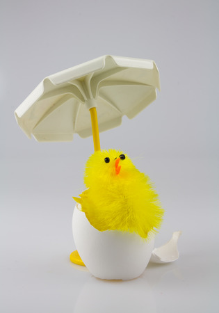 parasol: One chicken with parasol