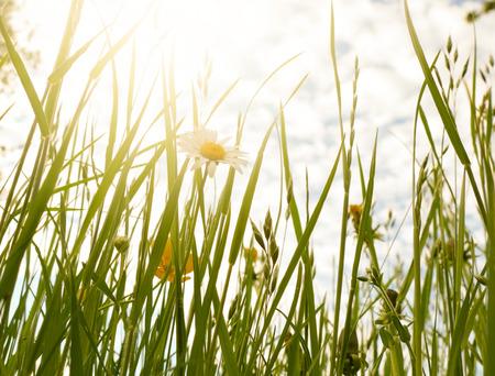 flowery: Flowery meadow in the sun