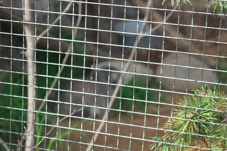 Image of mesh animal enclosure Stockfoto