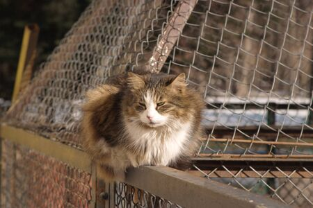An image of a cat dozing on a fence