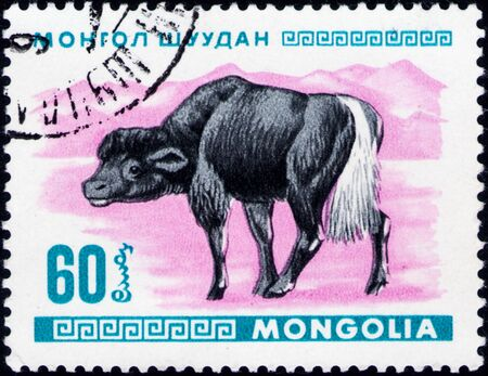 Saint Petersburg, Russia - February 06, 2020: Postage stamp issued in Mongolia with the image of Yak Calf, Bos grunniens. From the series on Young animals, circa 1968 新聞圖片
