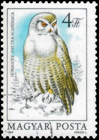 Saint Petersburg, Russia - May 17, 2020: Stamp printed in the Hungary with the image of the Snowy Owl, Nyctea scandiaca, circa 1984